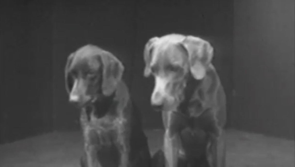 William Wegman: Dog Duet