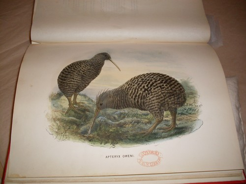 Kiwi from Walter Buller's A History of the Birds of New Zealand (1873) Collection: Christchurch City Libraries Ngā Kete Wānanga-o-Ōtautahi