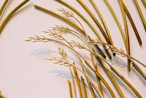 Composition with Grasses