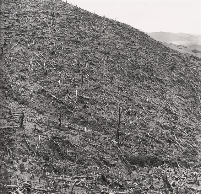 Devastation of burnt forest hillside, Westland