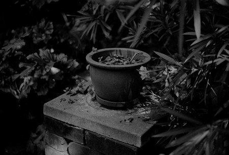 Daegan Wells Untitled (Extract from 'PrivateLodgings' William Sutton's Garden) 2016.Silver gelatin print. Jonathan Smart Gallery