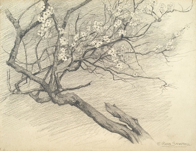 Study of an almond branch in bloom