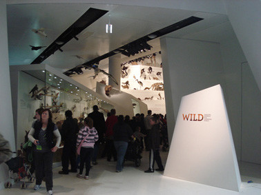 Wild exhibition at Melbourne Museum.