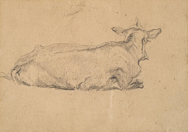 Sketchbook Study Of A Cow