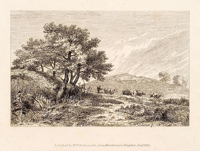 Cattle In Hilly Landscape With Trees At Left