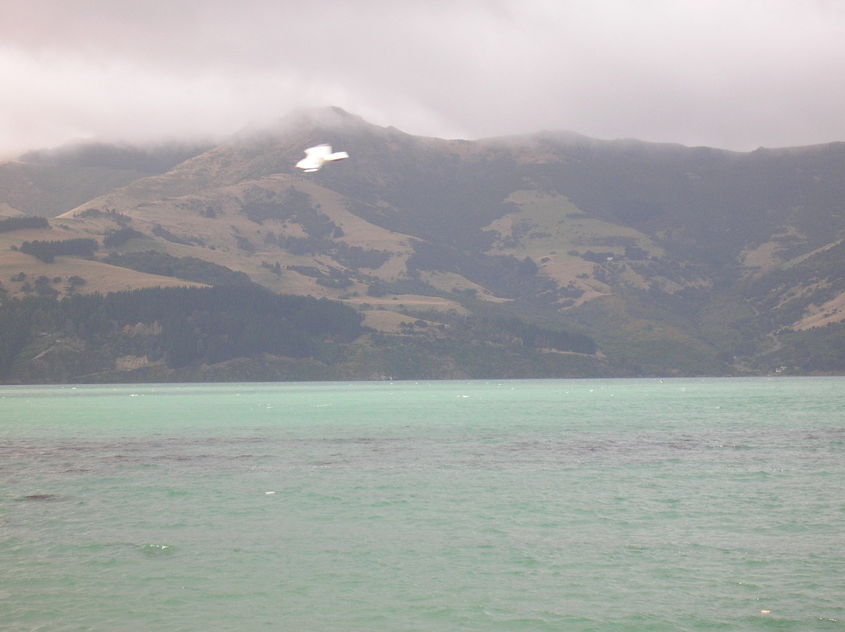 Wainui - to the west of the long harbour