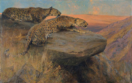 Hill Leopards