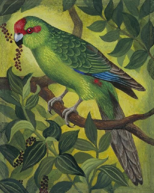 Kākāriki / Red-crowned Parakeet