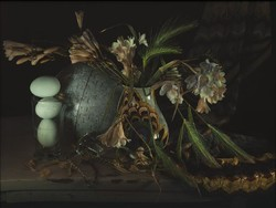 Still Life with Barley Grass and Freesia, Waiheke