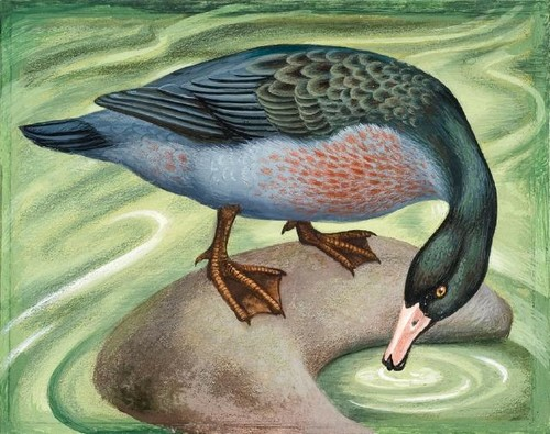Eileen Mayo Blue duck 1976. Gouache and coloured pencil on paper. Purchased, 2005Reproduced courtesy of Dr Jillian Cassidy