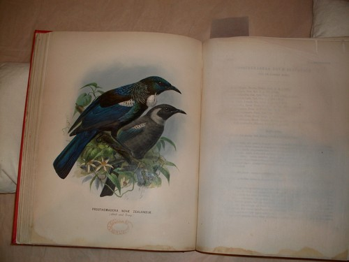 Tui from Walter Buller's A History of the Birds of New Zealand (1873) Collection: Christchurch City Libraries Ngā Kete Wānanga-o-Ōtautahi