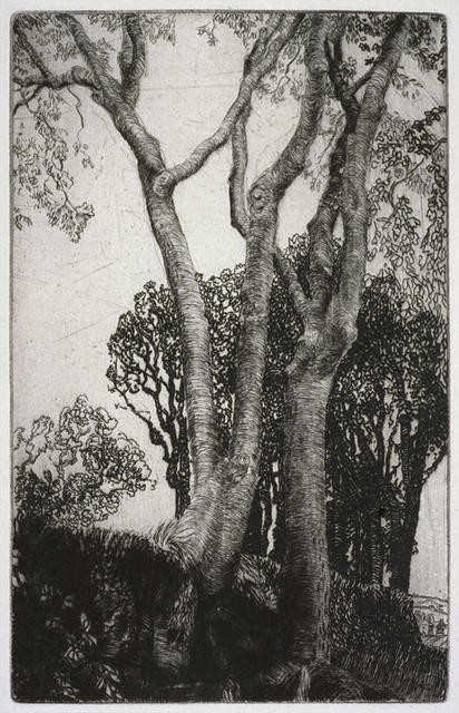 Two Ash Trees