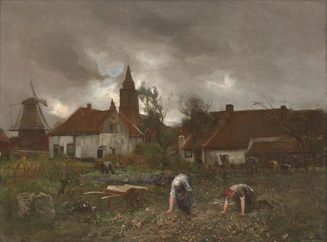 Gathering Beet, Village of Rijnsburg