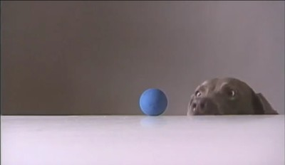 William Wegman: Fay Subtracts